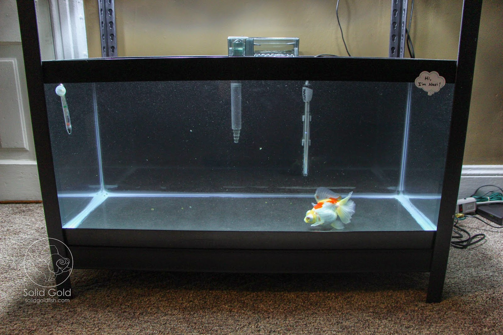 Solid Gold: The Perfect Rack for 40 Gallon Tanks