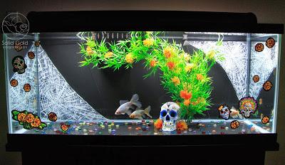 Solid Gold: Goldfish Basics