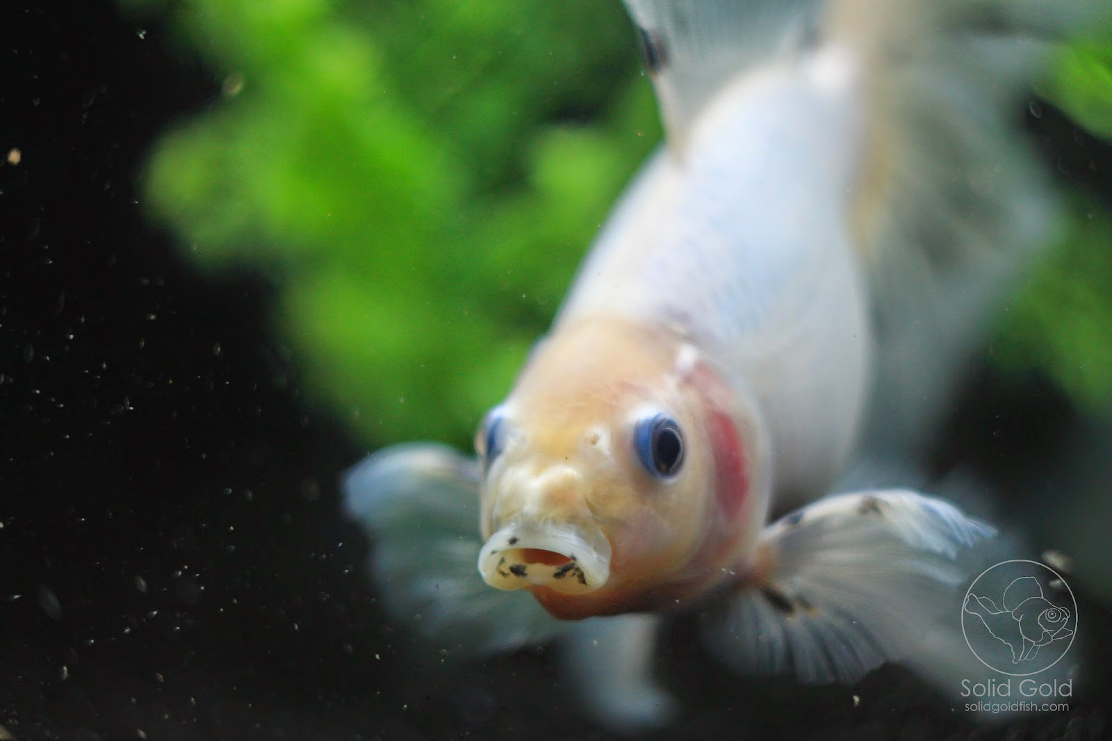 Beautiful Fish, Artfully Photgraphed