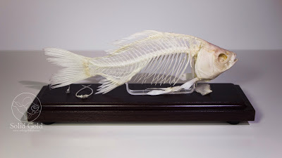 Goldfish Skeleton