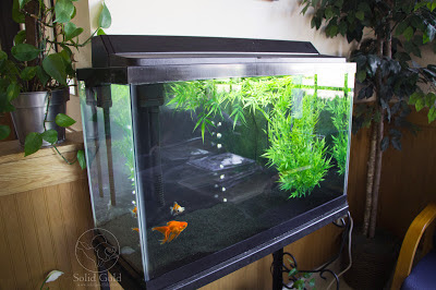 Tank Talk | Veterinary Fishes
