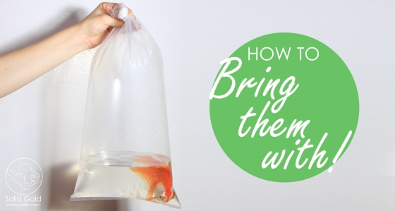 How to Move with Goldfish