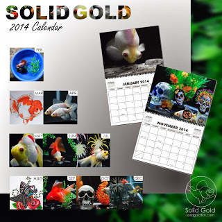 2014 SOLID GOLD Calendars Available Now!
